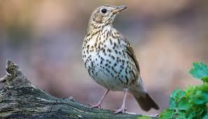 מה הקשר בין ציפור לפטריה?